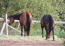 Häst med kuslig blick Arkivfoton