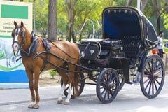 Häst med vagnen Arkivfoto