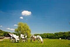 Häst med vagnen som äter gräs Fotografering för Bildbyråer