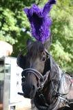 Häst nära Central Park på den 59th gatan Fotografering för Bildbyråer
