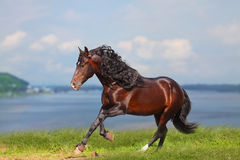 häst nära vatten Arkivfoton