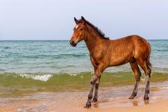 Häst nära vattnet arkivbild