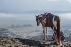 Häst nära Volcano Bromo, Java, Indonesien Arkivfoton