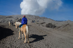 Häst nära Volcano Bromo, Java, Indonesien Royaltyfria Foton