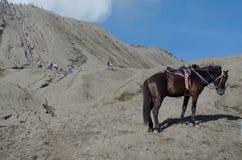 Häst nära Volcano Bromo, Java, Indonesien Arkivbild