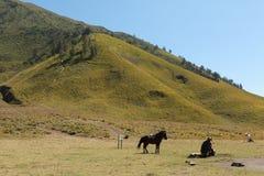 Häst och ägare Fotografering för Bildbyråer