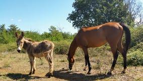 Häst och åsna Arkivbilder