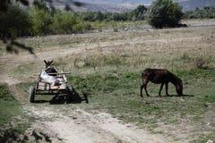 Häst och åsna Royaltyfri Fotografi