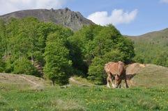Häst och berg Fotografering för Bildbyråer