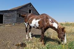 Häst och gamla wood ladugårdar och stall arkivfoton