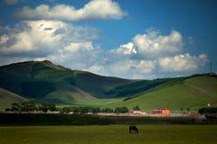 Häst och hus Royaltyfri Foto
