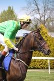 Häst och jockey Arkivbild