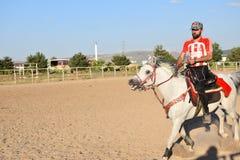 Häst och jockey royaltyfri fotografi
