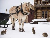 Häst och kaniner Fotografering för Bildbyråer