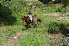 Häst och korg Royaltyfri Fotografi