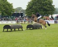 Häst och ryttare över hinder Royaltyfri Bild