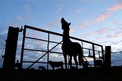 Häst och staket Royaltyfria Bilder