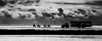 Häst och traktor Fotografering för Bildbyråer