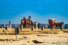 Häst och vagn, Giza, Kairo royaltyfri bild