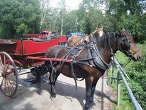 Häst och vagn, ståndsmässiga Kerry, Irland Royaltyfria Bilder