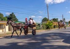 Häst- och vagnsVinales Kuba Arkivbilder