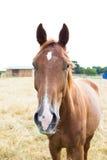 Häst på ängdjurhemhjälp Arkivbild