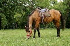 Häst på ängen Fotografering för Bildbyråer