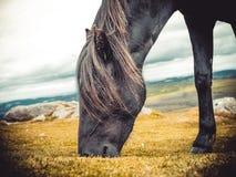 Häst på ängen Royaltyfria Bilder