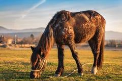 Häst på berget Royaltyfria Bilder