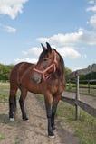 Häst på den breda ängeln för lantgård Arkivbild