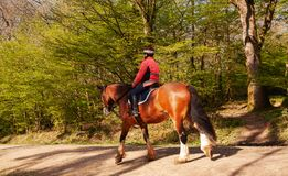 Häst på den bridleway skogen Arkivbild