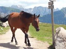 Häst på en bana Arkivfoton