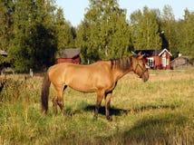 Häst på en beta Royaltyfria Foton