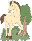 Häst på en gå Arkivfoto