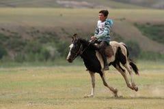 Häst på en galopp Fotografering för Bildbyråer