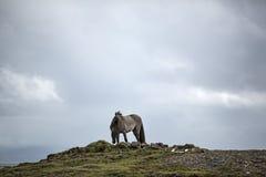 Häst på en kull Royaltyfria Bilder