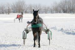 Häst på en vit snow Fotografering för Bildbyråer