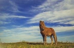 Häst på ett grönt gräs Arkivbilder