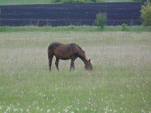 Häst på fältet royaltyfri bild