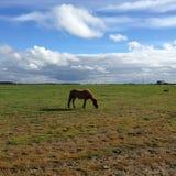 Häst på fältet Arkivfoto