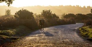 Häst på flyttningen i ny skog arkivbild