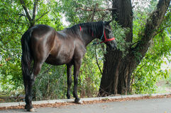 Häst på gatan Arkivbild