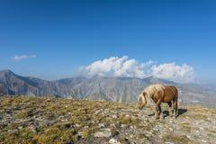 Häst på kanten av ett berg, Ecrins, fjällängar, Frankrike Royaltyfria Foton