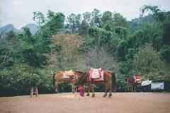 Häst på kullen Royaltyfri Bild