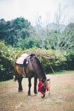 Häst på kullen Arkivfoton
