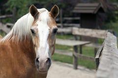 Häst på lantgården Arkivbild