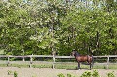 Häst på lantgården med staketet Royaltyfria Bilder