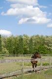 Häst på lantgården med träd Royaltyfria Foton