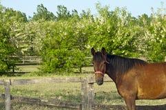 Häst på lantgården med trevliga träd Royaltyfri Fotografi