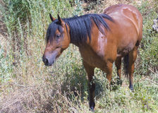 Häst på naturen Royaltyfri Foto